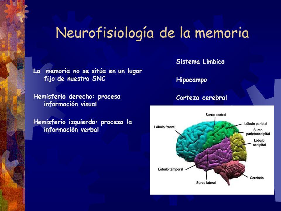 Neurofisiología de la memoria