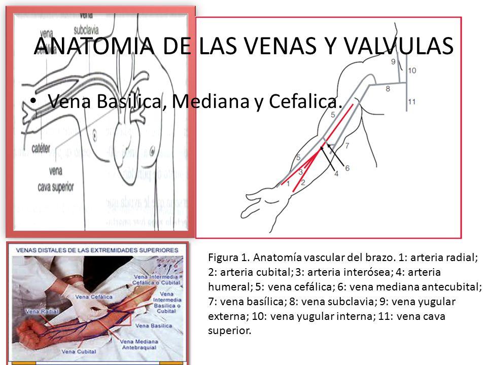 Único Conectar La Anatomía Y La Fisiología Colina Mcgraw Molde ...