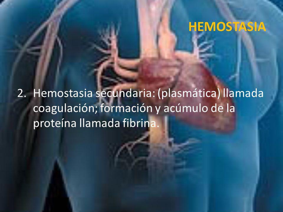 HEMOSTASIA Hemostasia secundaria: (plasmática) llamada coagulación; formación y acúmulo de la proteína llamada fibrina.