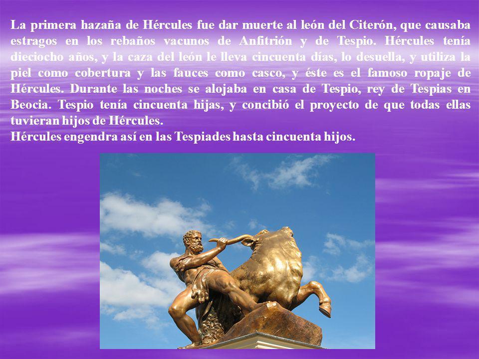 La primera hazaña de Hércules fue dar muerte al león del Citerón, que causaba estragos en los rebaños vacunos de Anfitrión y de Tespio. Hércules tenía dieciocho años, y la caza del león le lleva cincuenta días, lo desuella, y utiliza la piel como cobertura y las fauces como casco, y éste es el famoso ropaje de Hércules. Durante las noches se alojaba en casa de Tespio, rey de Tespias en Beocia. Tespio tenía cincuenta hijas, y concibió el proyecto de que todas ellas tuvieran hijos de Hércules.