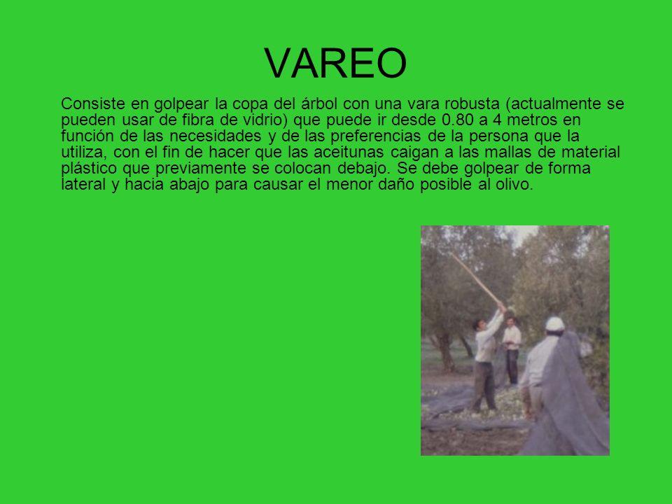 VAREO