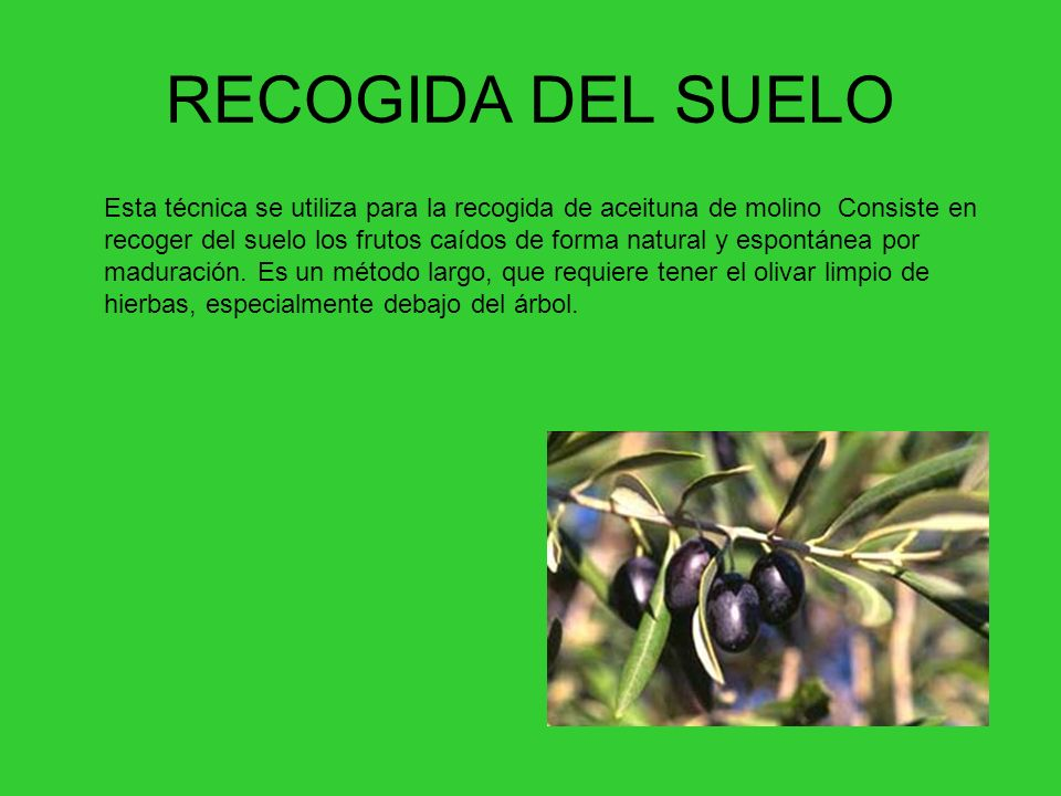 RECOGIDA DEL SUELO
