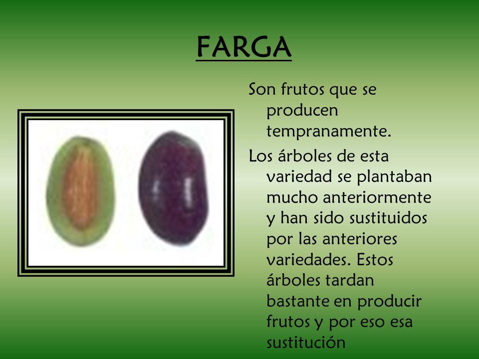 FARGA Son frutos que se producen tempranamente.