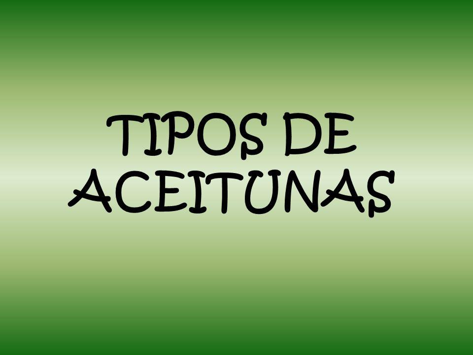 TIPOS DE ACEITUNAS