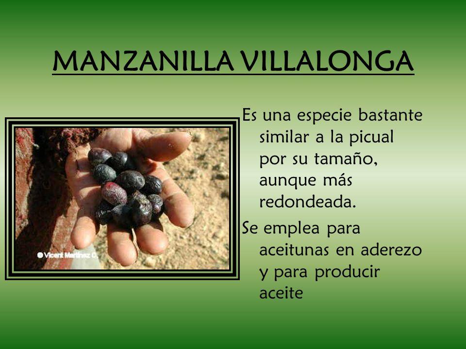 MANZANILLA VILLALONGA