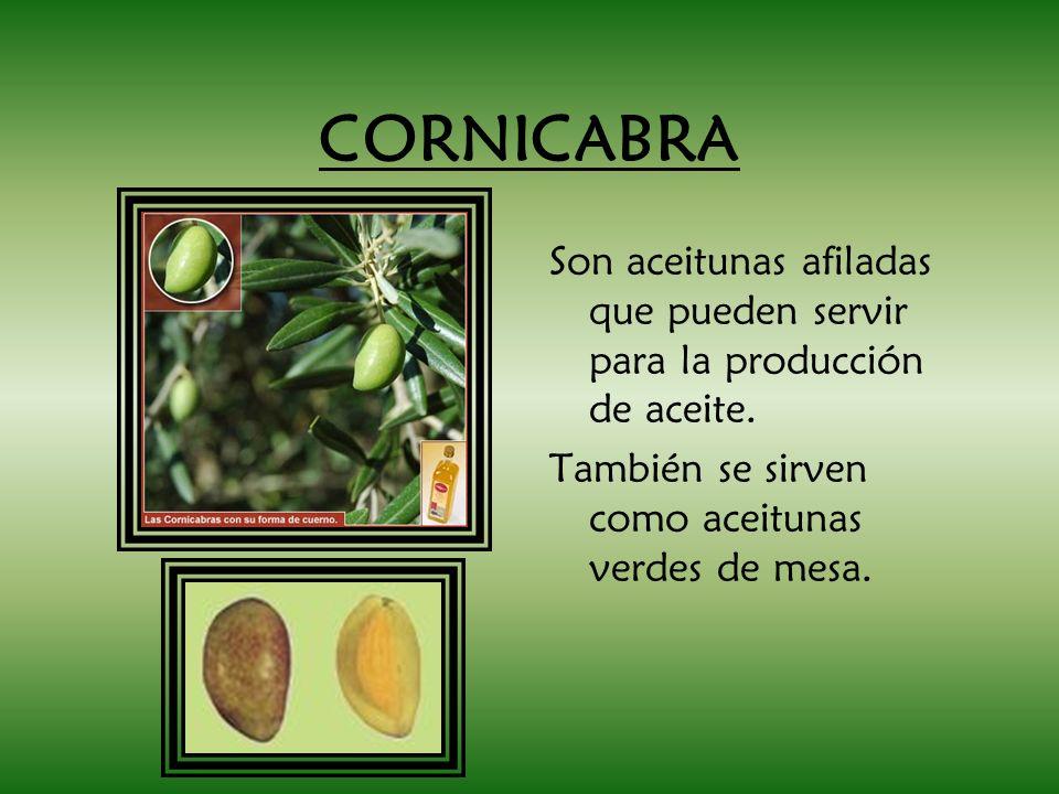 CORNICABRA Son aceitunas afiladas que pueden servir para la producción de aceite.