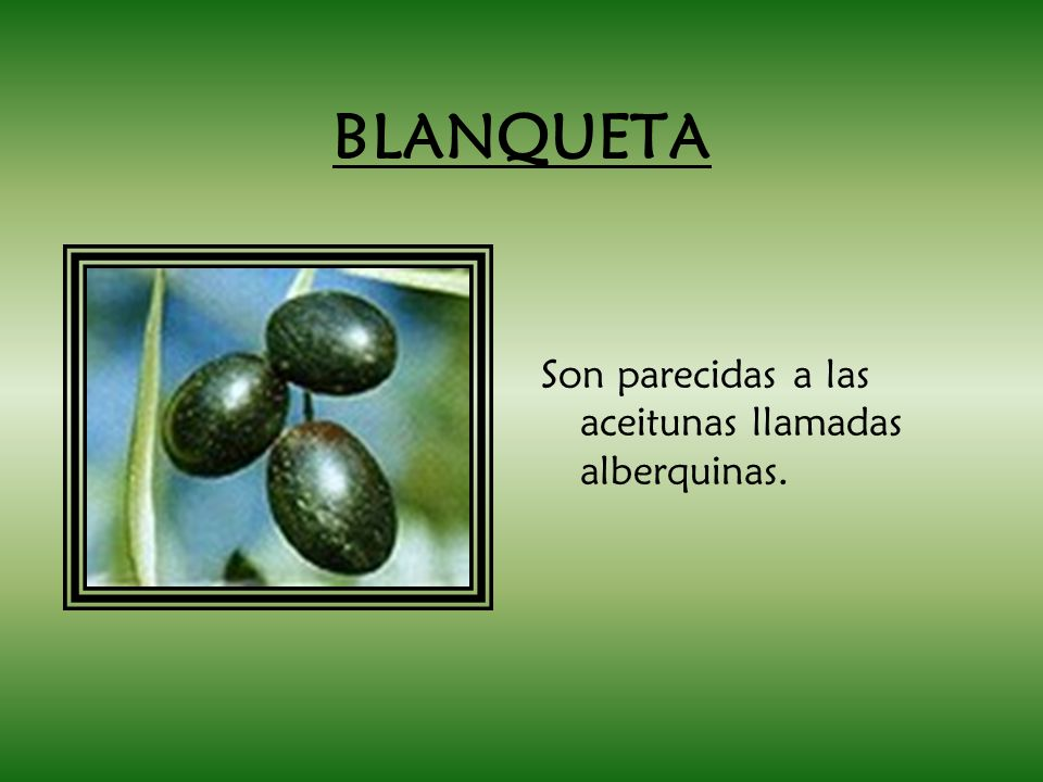BLANQUETA Son parecidas a las aceitunas llamadas alberquinas.