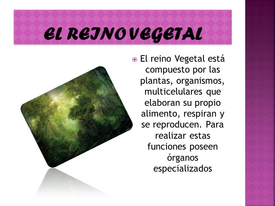 El reino vegetal