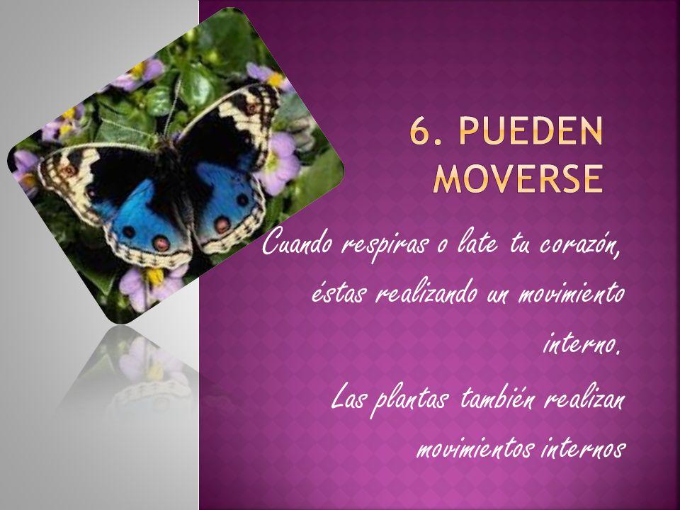 Las plantas también realizan movimientos internos