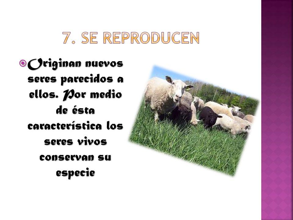 7. Se reproducen Originan nuevos seres parecidos a ellos.