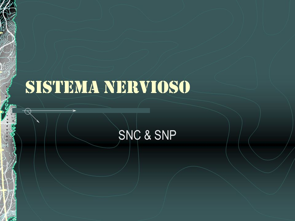 SISTEMA NERVIOSO SNC & SNP