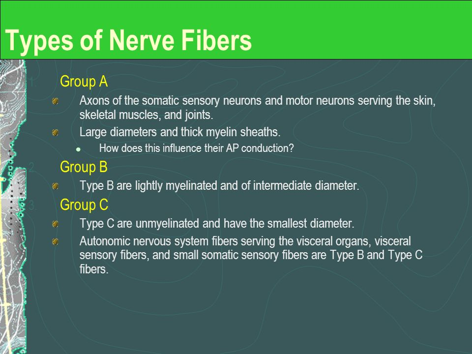 Types of Nerve Fibers Group A Group B Group C
