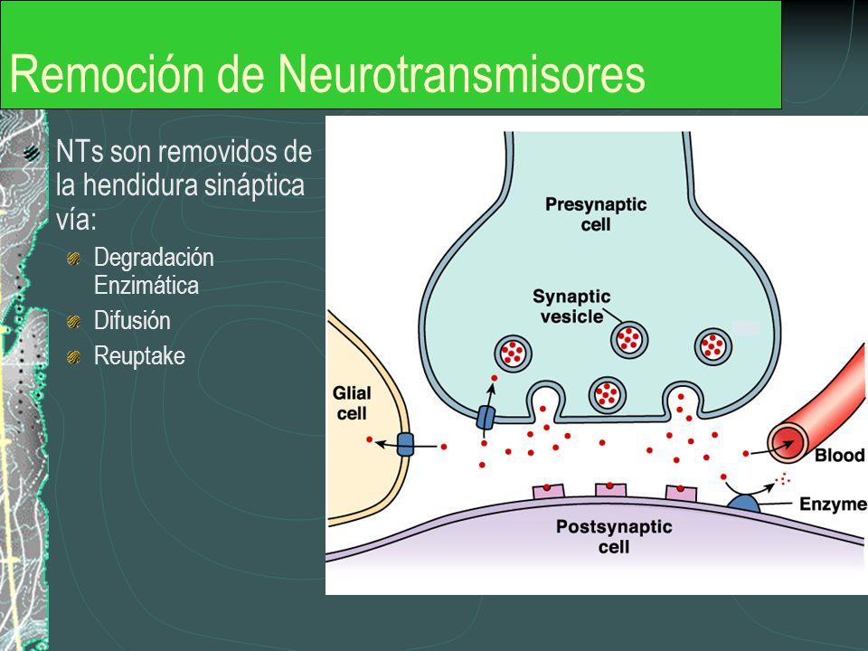Remoción de Neurotransmisores