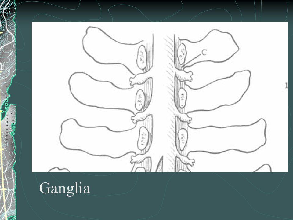 Ganglia