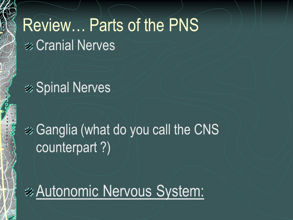 Review… Parts of the PNS