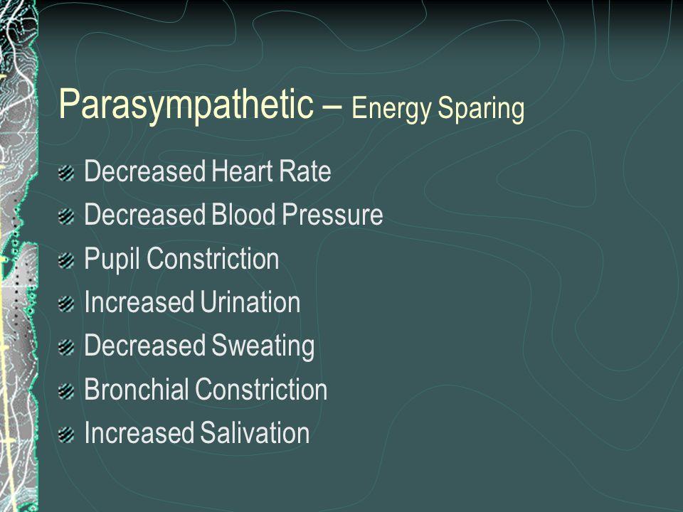 Parasympathetic – Energy Sparing