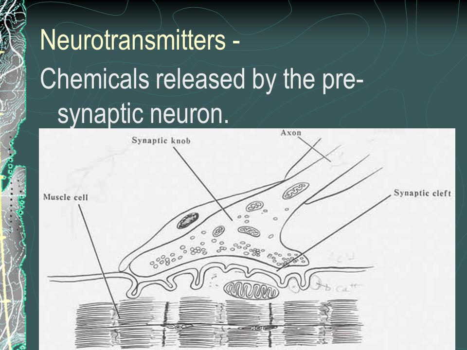 Neurotransmitters - Chemicals released by the pre-synaptic neuron.