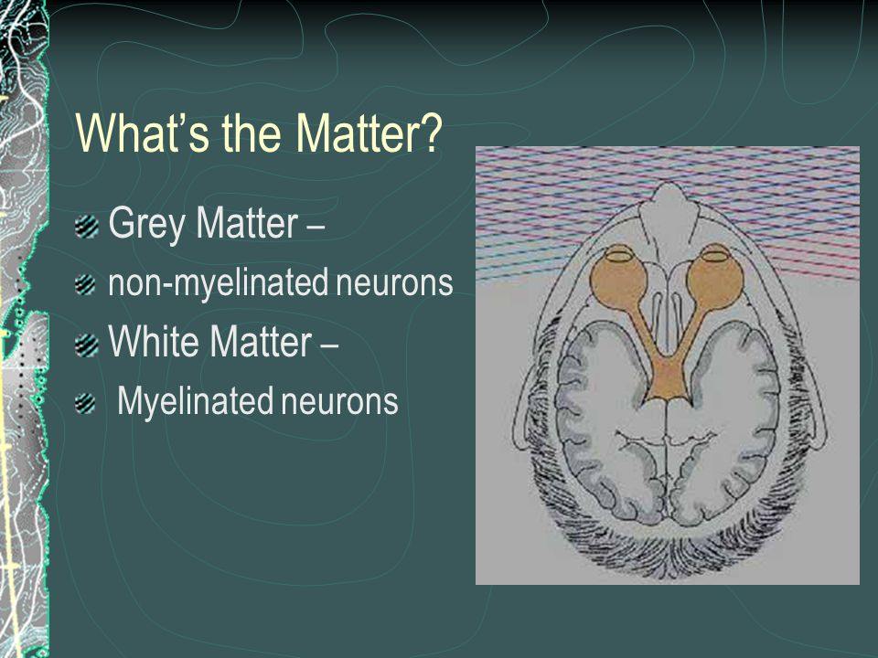 What's the Matter Grey Matter – White Matter – non-myelinated neurons
