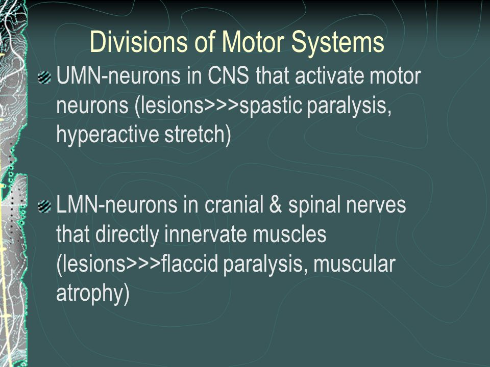 Divisions of Motor Systems
