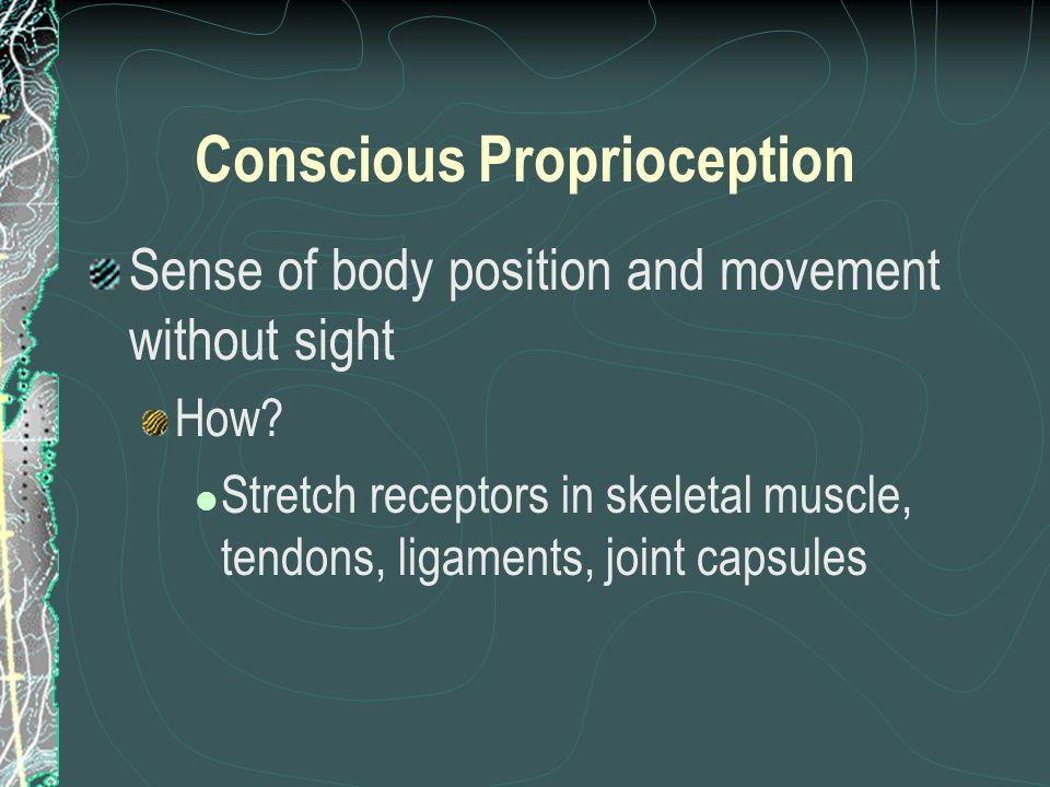 Conscious Proprioception