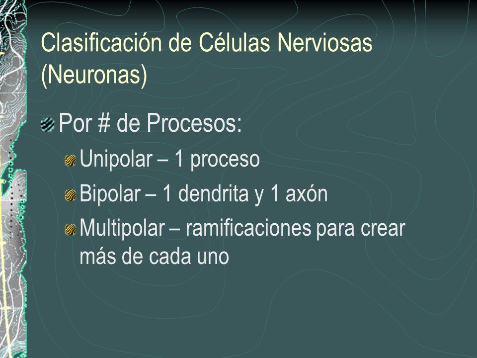 Clasificación de Células Nerviosas (Neuronas)