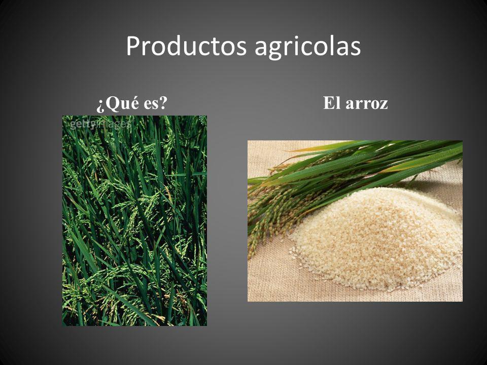 Productos agricolas ¿Qué es El arroz