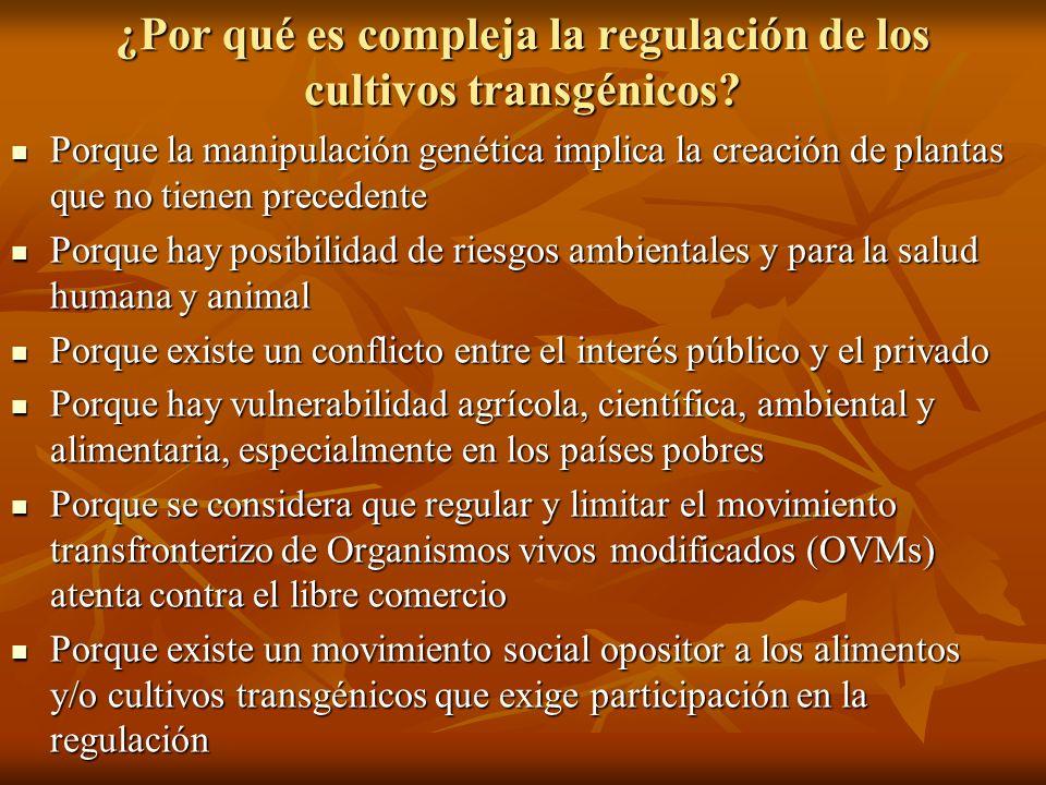 ¿Por qué es compleja la regulación de los cultivos transgénicos