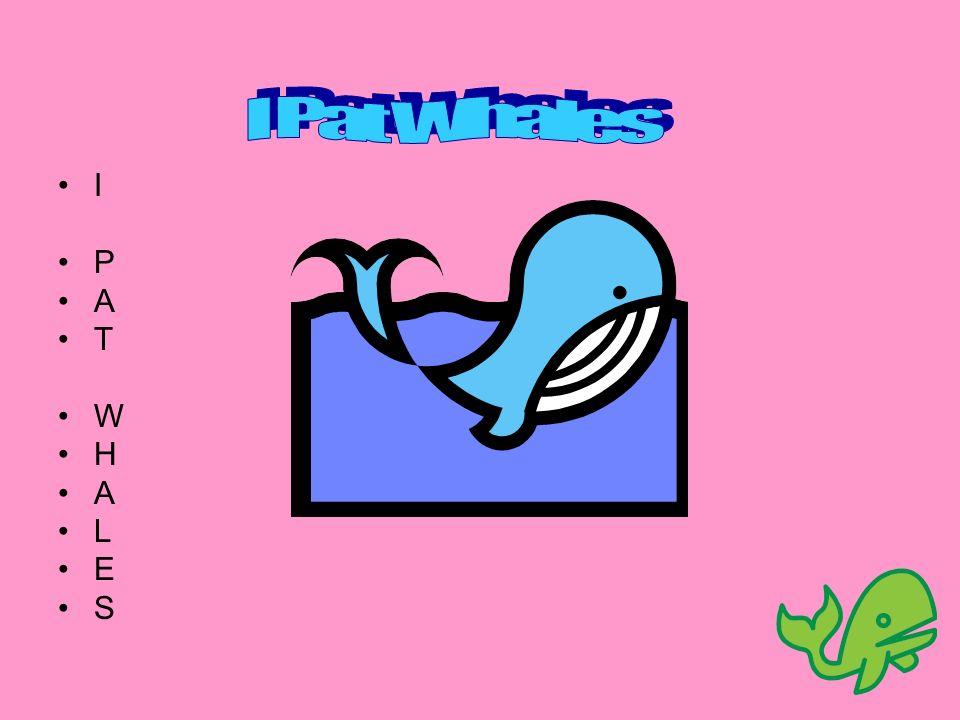 I Pat Whales I P A T W H L E S