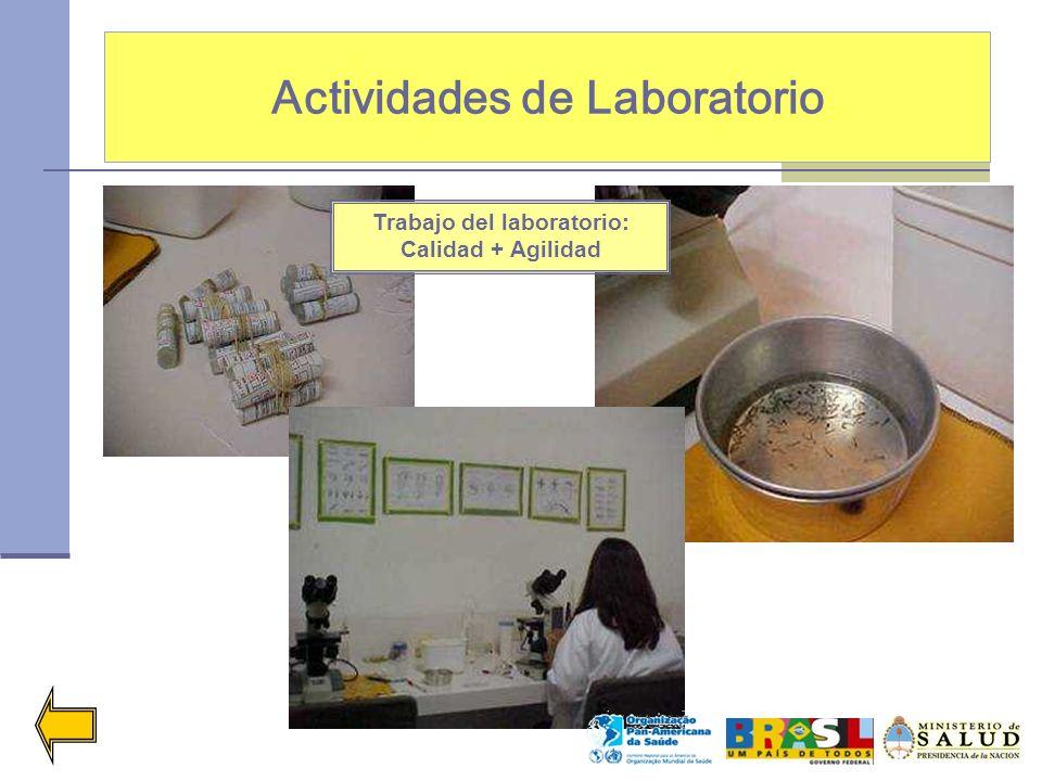 Actividades de Laboratorio