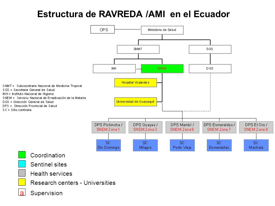 Estructura de RAVREDA /AMI en el Ecuador