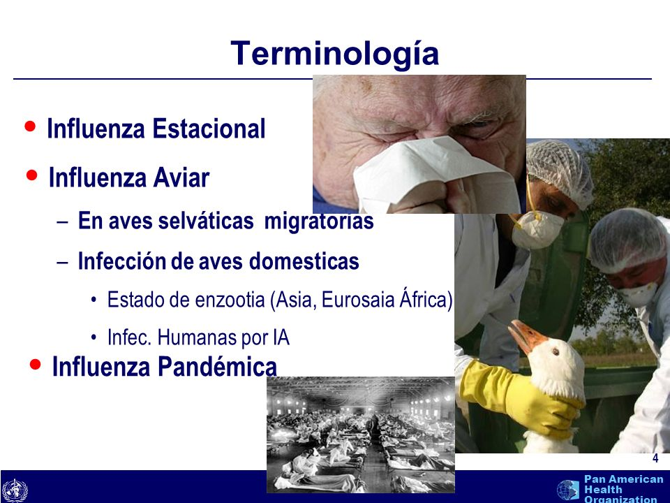 Terminología Influenza Estacional Influenza Aviar Influenza Pandémica