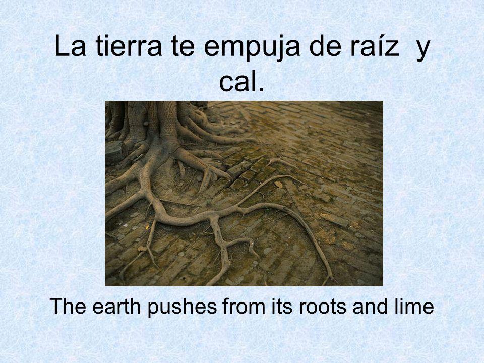 La tierra te empuja de raíz y cal.
