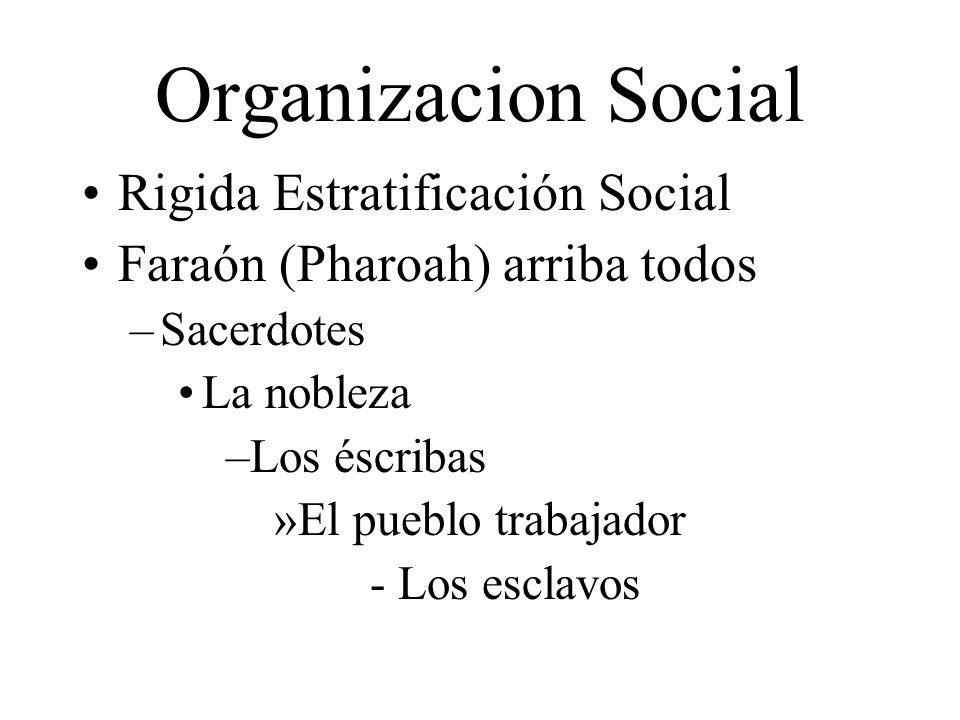 Organizacion Social Rigida Estratificación Social