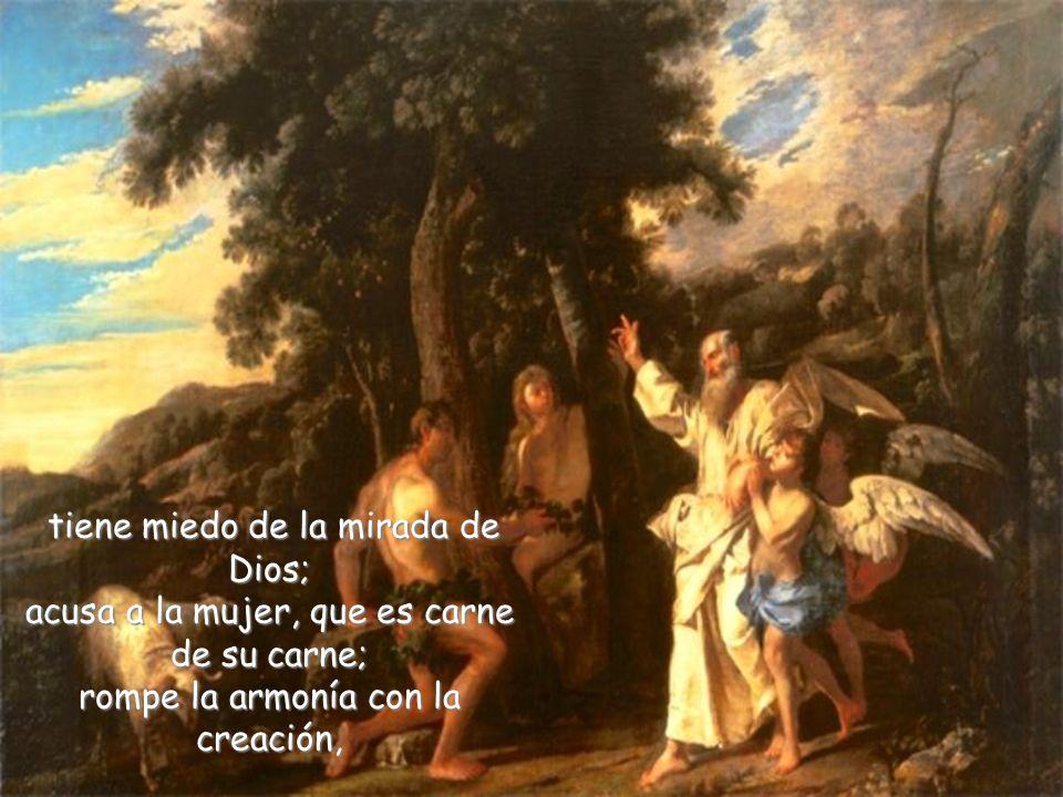 tiene miedo de la mirada de Dios; acusa a la mujer, que es carne de su carne; rompe la armonía con la creación,