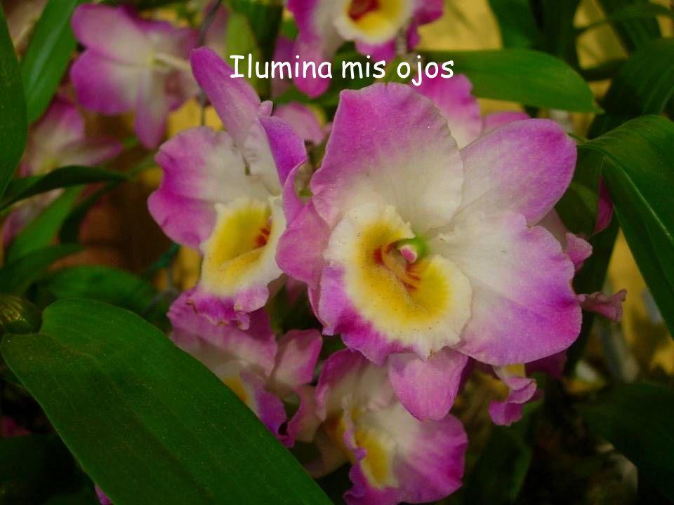 Ilumina mis ojos