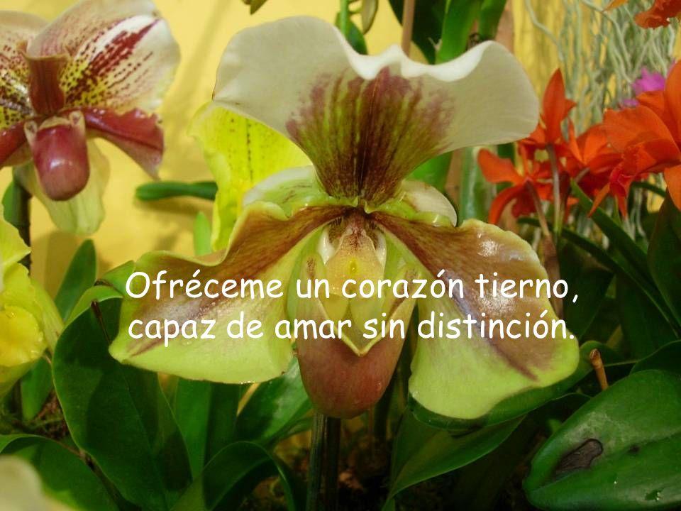 Ofréceme un corazón tierno, capaz de amar sin distinción.