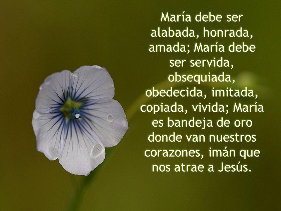 María debe ser alabada, honrada, amada; María debe ser servida, obsequiada, obedecida, imitada, copiada, vivida; María es bandeja de oro donde van nuestros corazones, imán que nos atrae a Jesús.