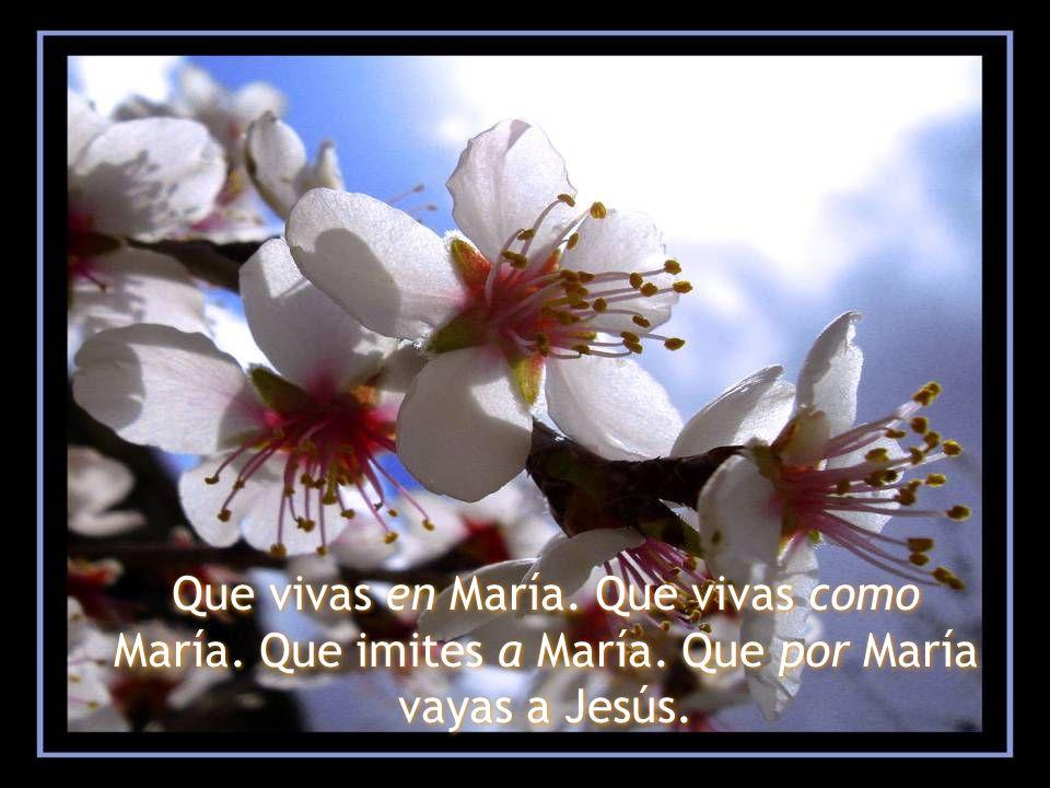 Que vivas en María. Que vivas como María. Que imites a María