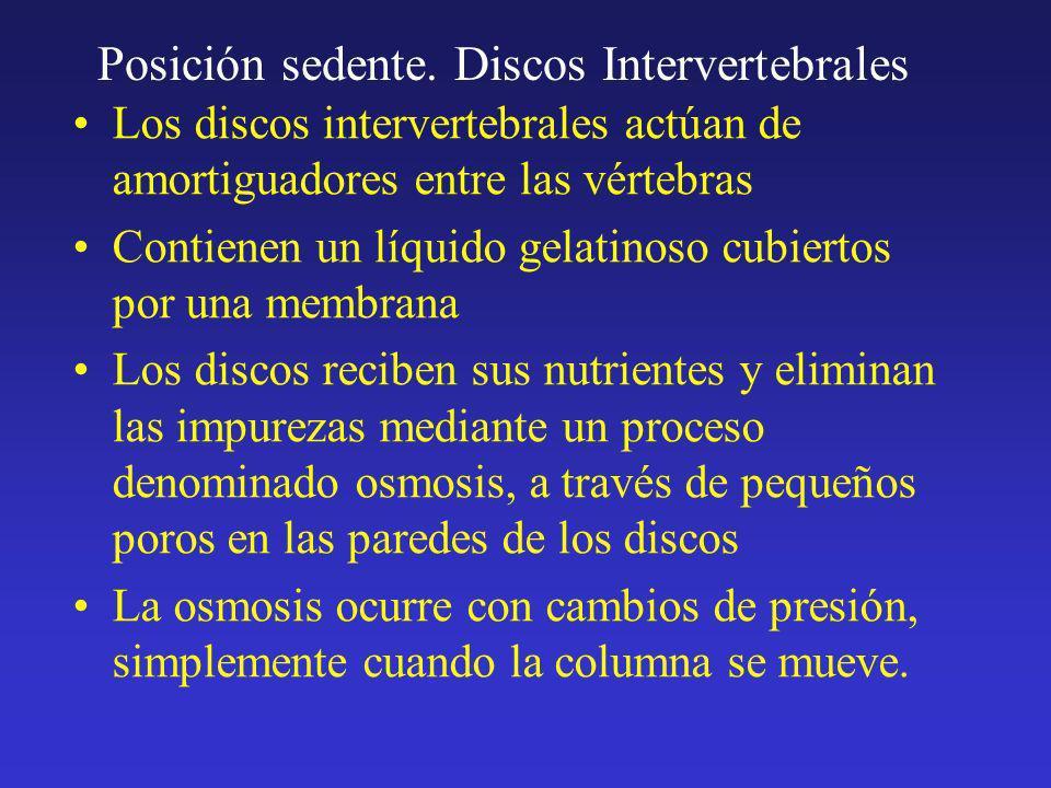 Posición sedente. Discos Intervertebrales