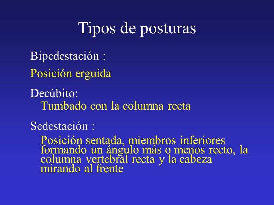 Tipos de posturas Bipedestación : Posición erguida Decúbito: