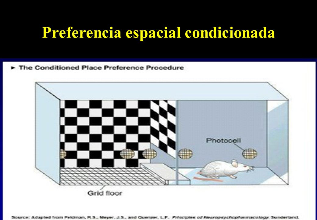 Preferencia espacial (foto)