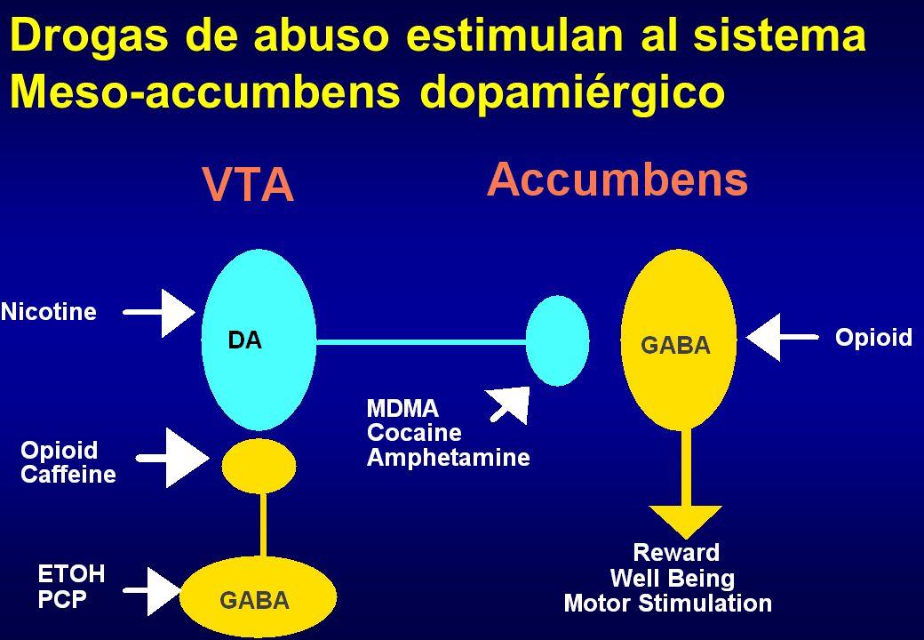 Drogas de abuso estimulan al sistema Meso-accumbens dopamiérgico