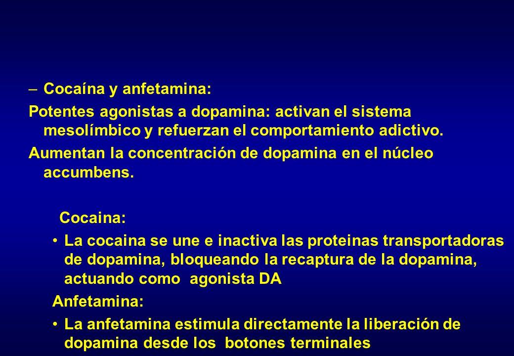 Cocaína y anfetamina: Potentes agonistas a dopamina: activan el sistema mesolímbico y refuerzan el comportamiento adictivo.