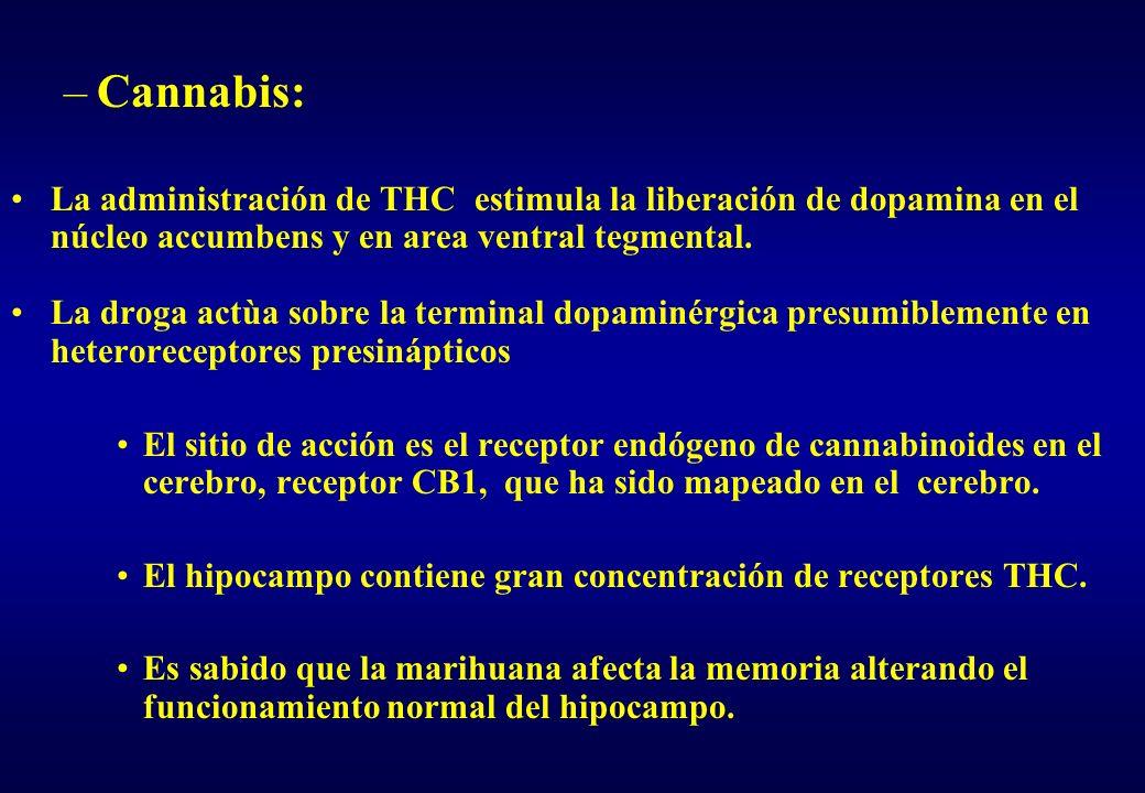 Cannabis: La administración de THC estimula la liberación de dopamina en el núcleo accumbens y en area ventral tegmental.