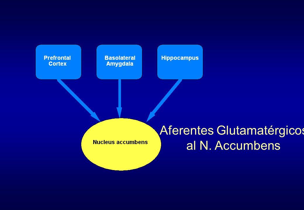Aferentes Glutamatérgicos