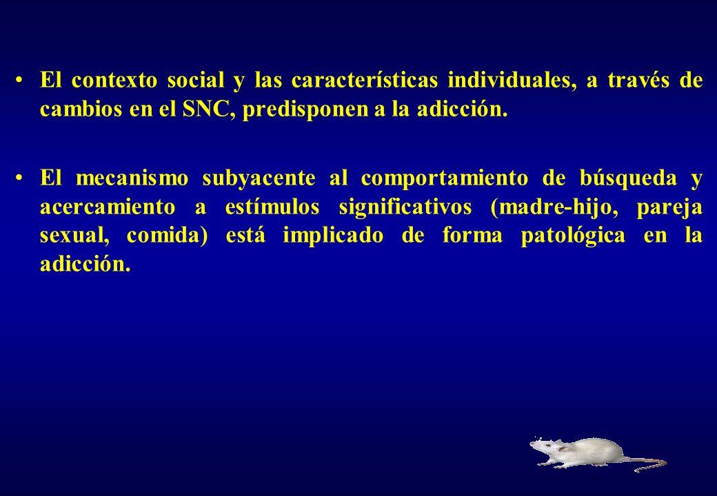 El contexto social y las características individuales, a través de cambios en el SNC, predisponen a la adicción.