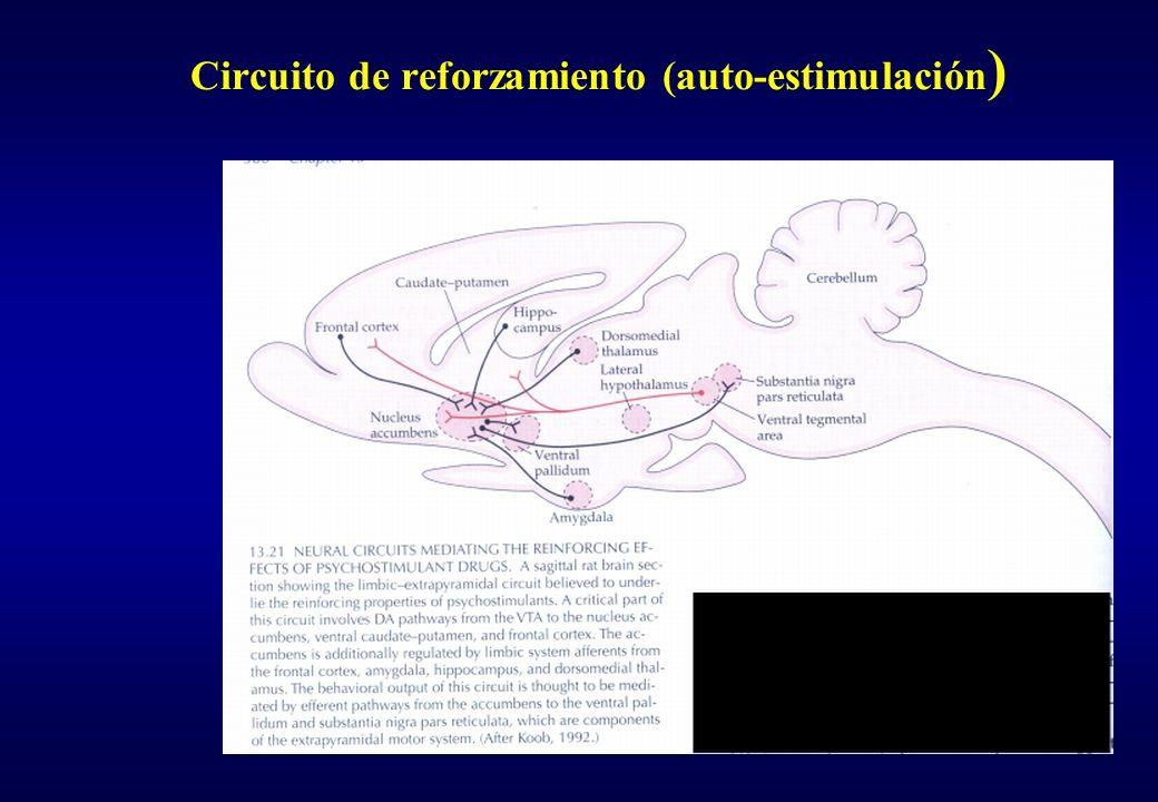 Circuito de reforzamiento (auto-estimulación)