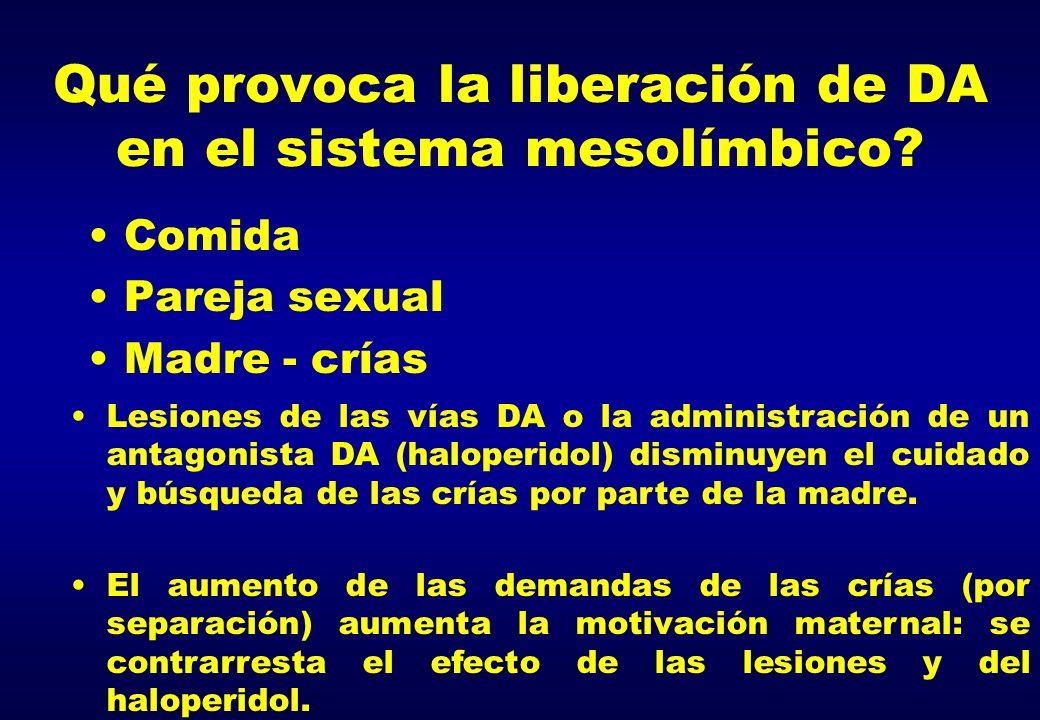 Qué provoca la liberación de DA en el sistema mesolímbico