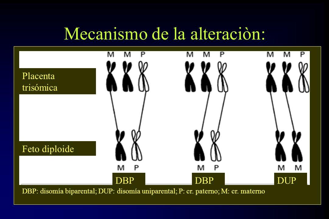 Mecanismo de la alteraciòn:
