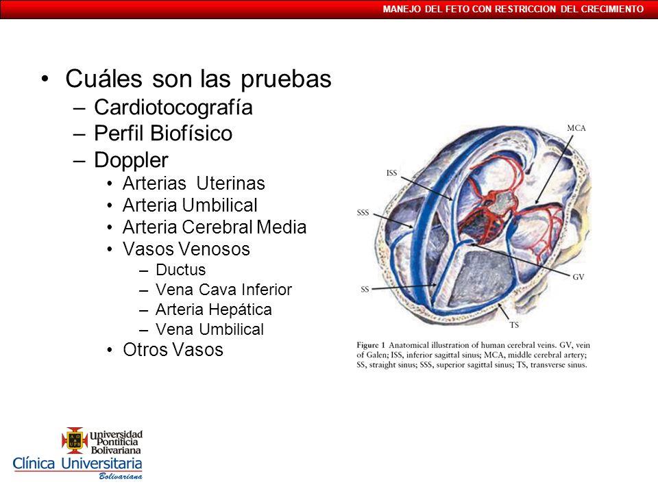 Cuáles son las pruebas Cardiotocografía Perfil Biofísico Doppler